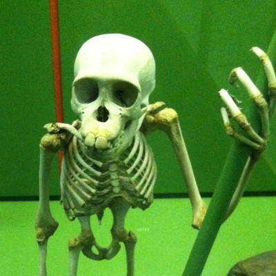 Chimp skeleton (Museum of Natural History in New York)